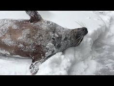 Animals At The Oregon Zoo Have The Time Of Their Lives After A Huge Snowstorm - Ftw Video