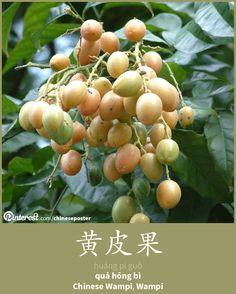 黄皮果 - Huáng pí guǒ - quả hồng bì - wampi; chinese wampi; wampee
