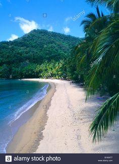 Tropical coconut tree lined beach Brammo Bay Dunk Island Queensland Australia Stock Photo