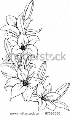lily tattoo sketch | Vector illustration of lily in black and white colors. - stock vector