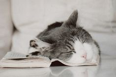 .I just love cuddling up with a good book!