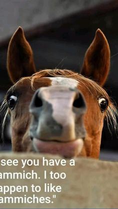 Funny Horse Memes, Funny Horses, Cute Horses, Funny Dogs, Horse Humor, Funny Memes, Hilarious, Cute Animal Memes, Funny Animal Quotes