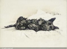 """Morning, a Scottie dog lying on a bed"" by Lucy Dawson, 1954"