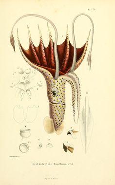 Mollusques vivants et fossiles, ou, description...