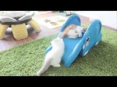 Cats Playing And Dancing