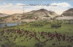 *Vintage Hereford Round Up in Texas Postcard