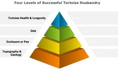 Redfoot Tortoise Husbandry success is founded on a core understanding of the topography and geology of the region that makes up their native range. Longevity Diet, Tortoises, Geology, Foundation, Knowledge, Success, Advice, Range, Posts