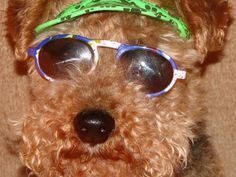 20 Funny Dog Pictures...A Spectacle to Behold
