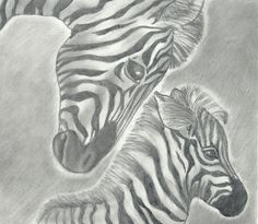 A pencil drawing of a zebra and her baby. All my drawings are for sale by the way, and I take requests :) Animal Drawings, Pencil Drawings, Art Drawings, Zebra Drawing, Safari Animals, Zebras, How To Draw Hands, Sketches, Drawing Ideas