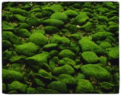 spring Seaweed