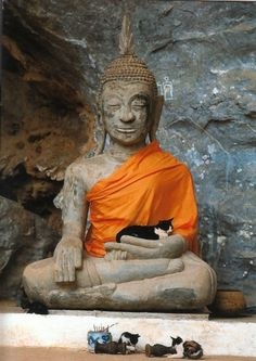 Buddha Statue Cradling A CAT Buddhism Postcard Cool Cats, I Love Cats, Funny Cats, Funny Animals, Cute Animals, Cute Kittens, Cats And Kittens, Crazy Cat Lady, Crazy Cats