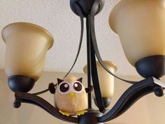 Owly is on the lookout for new horizons. Day 223 of #yearofowly #lifeofowly