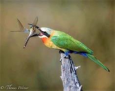 Animal Action, Bird, Animals, Animales, Animaux, Birds, Animal, Animais, Dieren