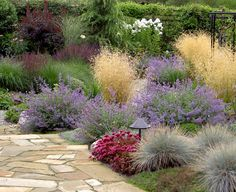 Catmint, KF, Blue Oat Grass with that red/rose/wine colour. Could use Sedum. Try in front yard. Hopkins-Rees contemporary landscape