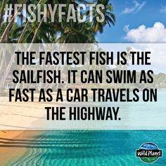 Fun fact! #fish #oceans