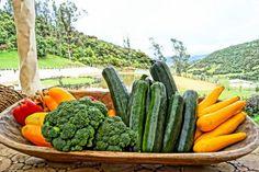 Verduras, verduritas...
