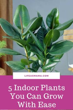 You don't need a green thumb to grow these plants with ease! #lifeasmama #gardening #indoorplants