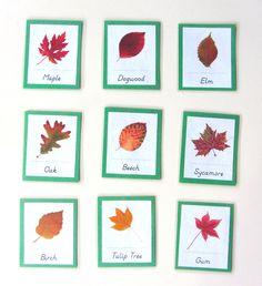 Autumn Leaves 3-Part Cards