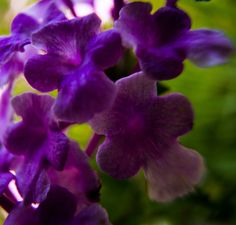 Purple Flowers by Jay Stockhaus on 500px