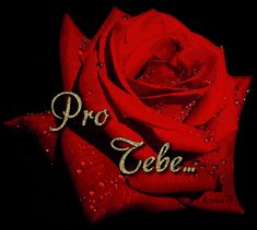 Pro Tebe