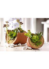 Home affaire Kunstpflanze »Sukkulenten im Tontopf« (2 - tlg.) - Wohnen Planter Pots, Blog, Holiday Destinations, Succulents, Dekoration, Nice Asses, Ivy, Indoor, Homes