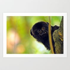 """Monkey in a tree, Wildlife Photography taken in the Montreal Biodome. """"Need Something?"""" Art Print by Nathan Cole"""