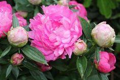 AU JARDIN CE WEEK-END- Chaque week-end, Marc Mennessier, journaliste au Figaro, ingénieur agricole et amoureux des plantes vous livre ses conseils et astuces pour faire de votre jardin un Éden.