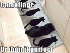 catmouflage.... SO CUTE!!!