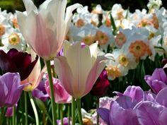 Dallas Blooms - Spring 2011