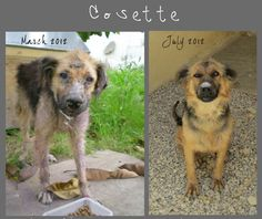 rescued from the streets of tunisia, before and after medication and love