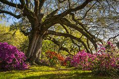 Featured Art - Charleston SC Magnolia Plantation - Southern Hospitality by Dave Allen