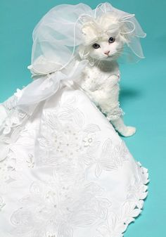 If I have a dog. This is what will be my ring berrer at my weading but in a tux or a cute dress. Lol not a cat. Ill train her. :)