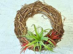 DIY Tillandsia Wreath Kit. Make your own air plant wreath easily with this kit from Air Plant Design Studio. Beautiful year-round! #holiday #wreath