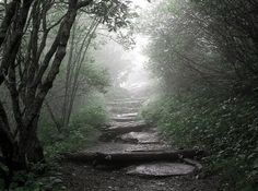 Path in the Misty Woods - Pixdaus