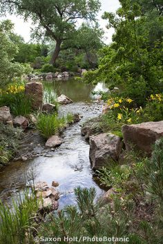 Pond edged with daylilies at Sasebo Japanese Garden at Rio Grande Botanic Garden