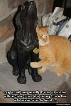 """""""Dog passed away recently. Owner got a statue with her collar around it in memory. This is their cat's reaction when he found it. Animals And Pets, Baby Animals, Funny Animals, Cute Animals, Animal Memes, Animals Planet, Cute Cats, Funny Cats, Cat Fun"""
