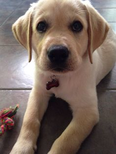 Puppies! | 27 Puppies For Anyone Who Needs A Pick-Me-Up