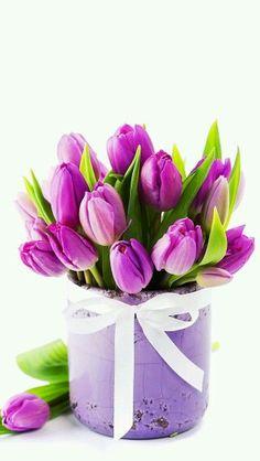 #KlauVázkez#Tulips #Holland