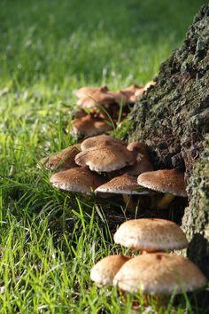 Autumn Utrecht 2016 Mushroom