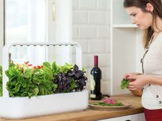 The Smart Garden 9 is a meticulously designed, self-growing indoor garden that revolutionizes how fresh food is grown. NASA inspired Smart Soil makes. Aquaponics Greenhouse, Aquaponics Plants, Hydroponics System, Hydroponic Gardening, Indoor Gardening, Plants Indoor, Urban Gardening, Container Gardening, Compost