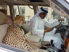 #myMINEOLA Funny Stuff  Wow, Leopard pets in one of UAE country. Cc. @Aelke_Mariska @Gisella Anastasia