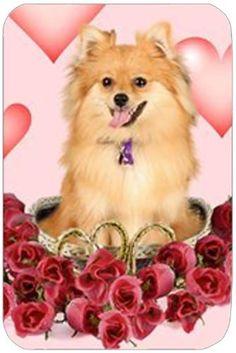 Pomeranian Tempered Cutting Board by Doggie of the Day, http://www.amazon.com/dp/B004MJ1VXK/ref=cm_sw_r_pi_dp_PANbrb0JQ1PXK
