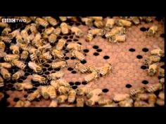Behind the Beehive - The Code - Episode 2 - BBC, about the significance of the hexagonal shape