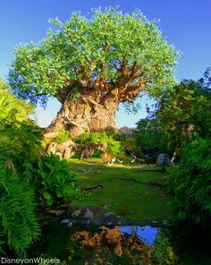 Tree of Life Garden
