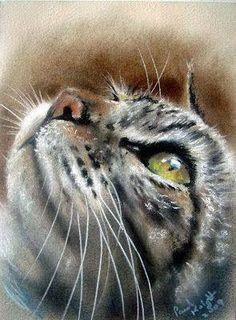 Cat Art - Pastel Paintings by Paul Knight. Pastel Drawing, Pastel Art, Cat Drawing, Drawing Eyes, Animal Paintings, Pastel Paintings, Horse Paintings, Illustration Art, Illustrations