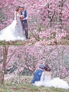 Sakura cherry tree engagement photo in Japan