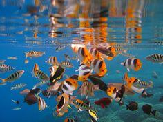 美しい海の世界へ。ダイビング初心者でも潜ってみたい8個の世界の海まとめ - Find Travel