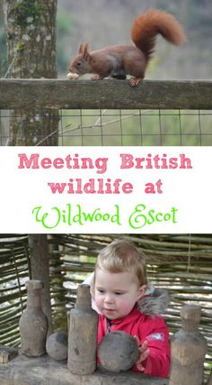 Review of a family day out meeting the native British wildlife at Wildwood Escot near Ottery St Mary in East Devon. A great outdoor adventure for kids