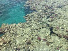 Θάλασσα, Κοραλλιογενούς Υφάλου