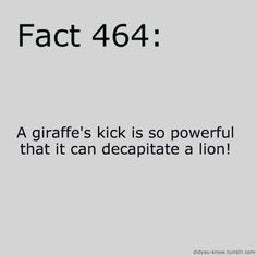 reason why giraffes are super cool! Giraffe Facts, Funny Giraffe, Girraffe Tattoo, Weird Facts, Fun Facts, Streamer Decorations, Giraffe Pictures, Best Quotes, Funny Quotes